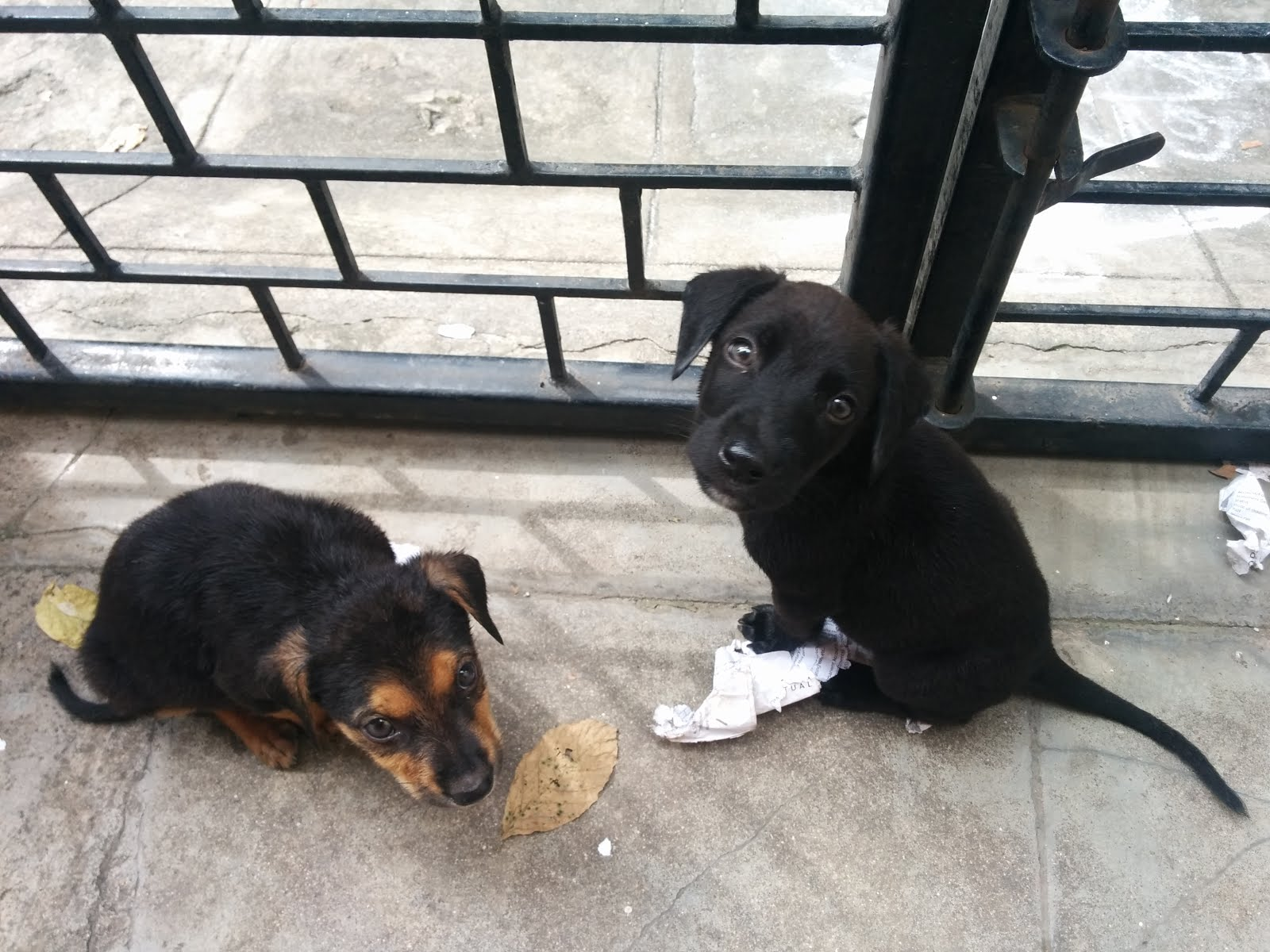 The 2 puppies that I adopted - Alpha and Omega
