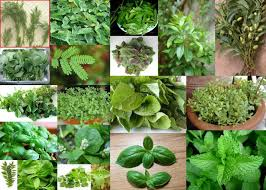 جدول أنواع النباتات الحولية دراسات اجتماعية صف سادس فصل ثالث لعام 1443
