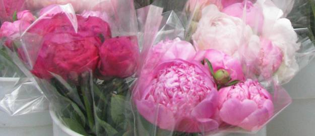 Peonies at the SOAR Farmers Market in Chicago, Illinois