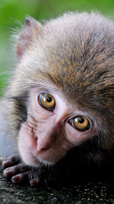 Chú Khỉ Con Đáng Yêu