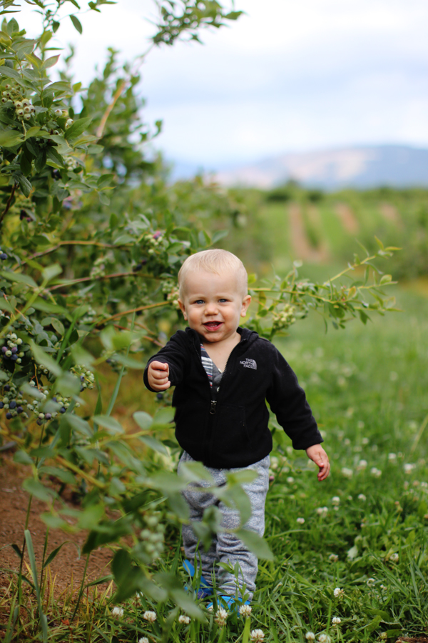 Blueberry picking in Hood River, Oregon