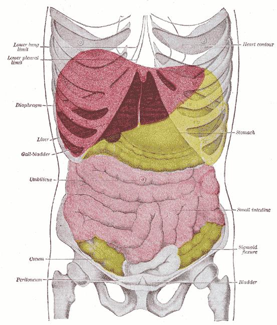 Cáncer de Hígado (Carcinoma Hepatocelular) y las Células Madre | El ...