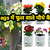 ग्रो बैग में फूलों के पौधे कैसे उगाएं