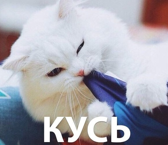 Кусь-кусь кот