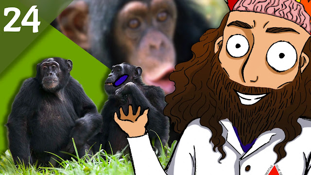 QN NEWS 24 - Seres humanos estão destruindo culturas de chimpanzés