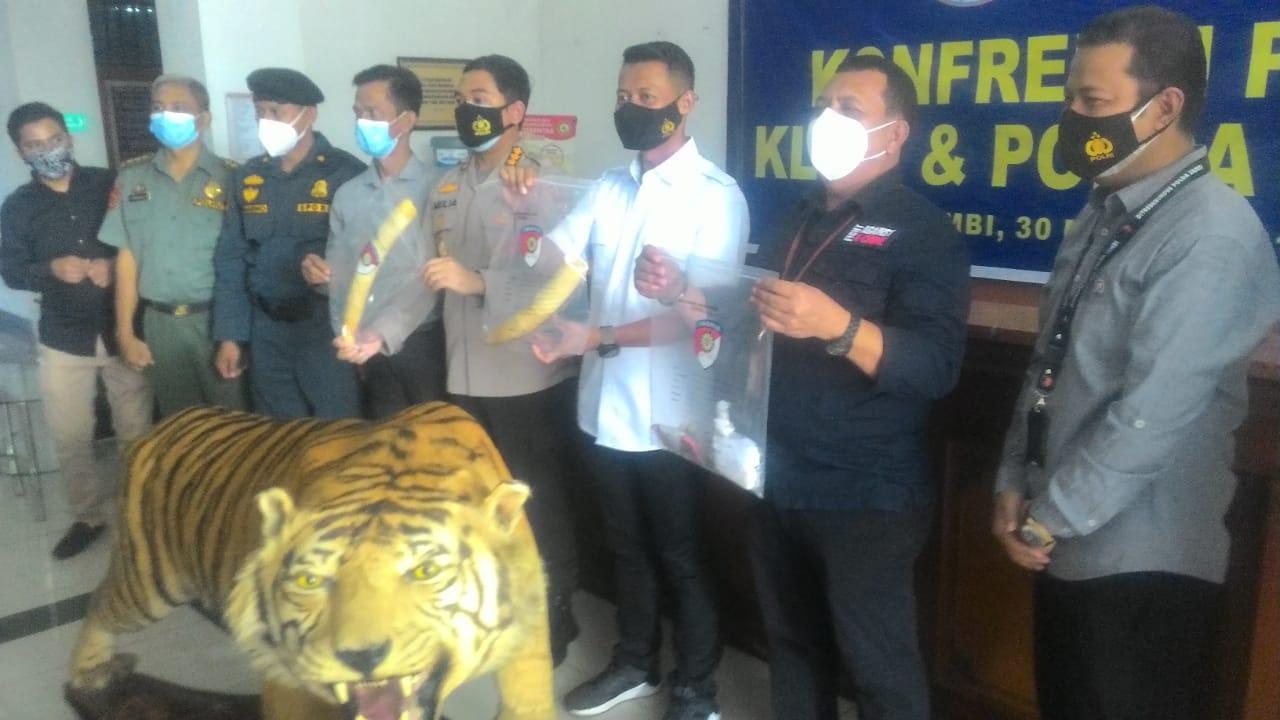 TIM Gakkum KLHK Tangkap Penjual Opsetan Harimau dan Gading Gajah
