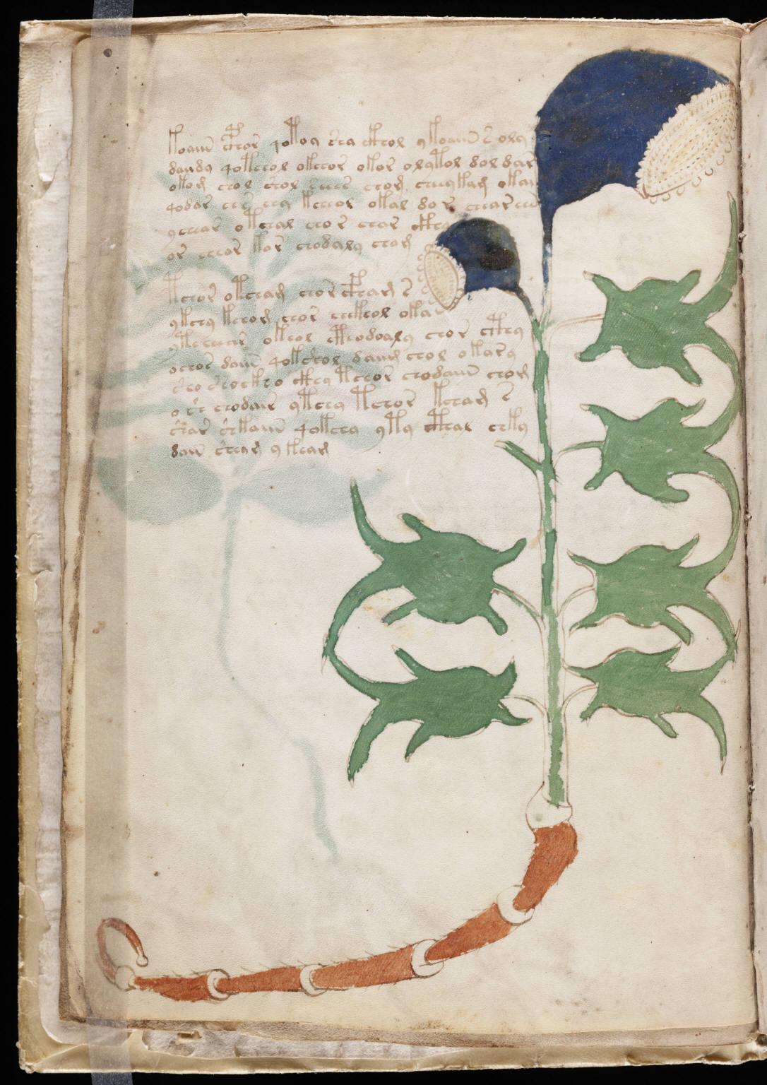 manuscrito008