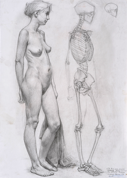 Magda Vacariu Artistic Anatomy For Life Drawing Planes Of The Head