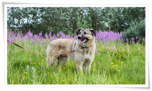 dog training collars uk