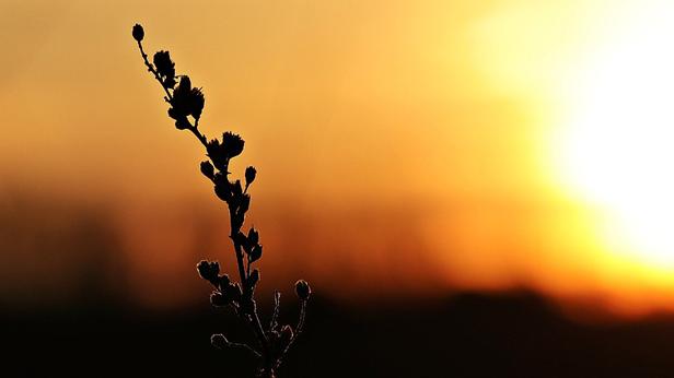 Tiga Cara Mengatasi Tamak Harta dan Penumbuh Sifat Qona'ah