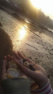 Kerang Hias yang Didapat di Pantai