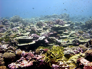 Tiny corals build gigantic life-sustaining, evolution-defying reefs. These fade away and come back, but we must help protect them as God's stewards.
