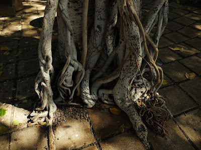 バニヤンツリーの根っこ
