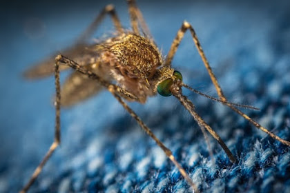 7 Cara Mudah dan Sederhana Agar Tidak Digigit Nyamuk