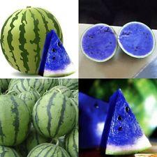 Mudflower: Blue watermelon seeds do NOT exist