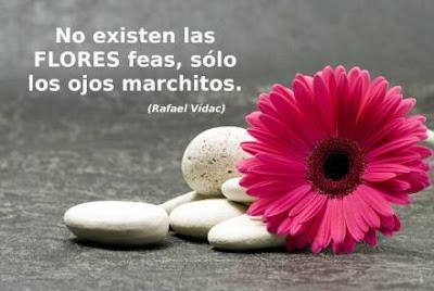 """Palabras para El Alma – Pensamientos: """"Flores"""""""