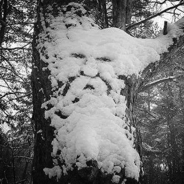 """""""Ho ho ho! Happy New Year and Merry Christmas!"""""""