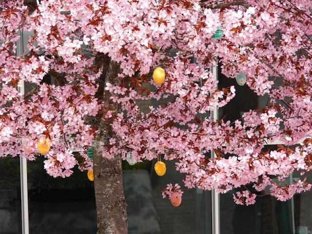 Fluffiga citroner i blomning?