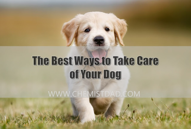 pets, dogs, care of dogs, home, home and living, taking care of dogs