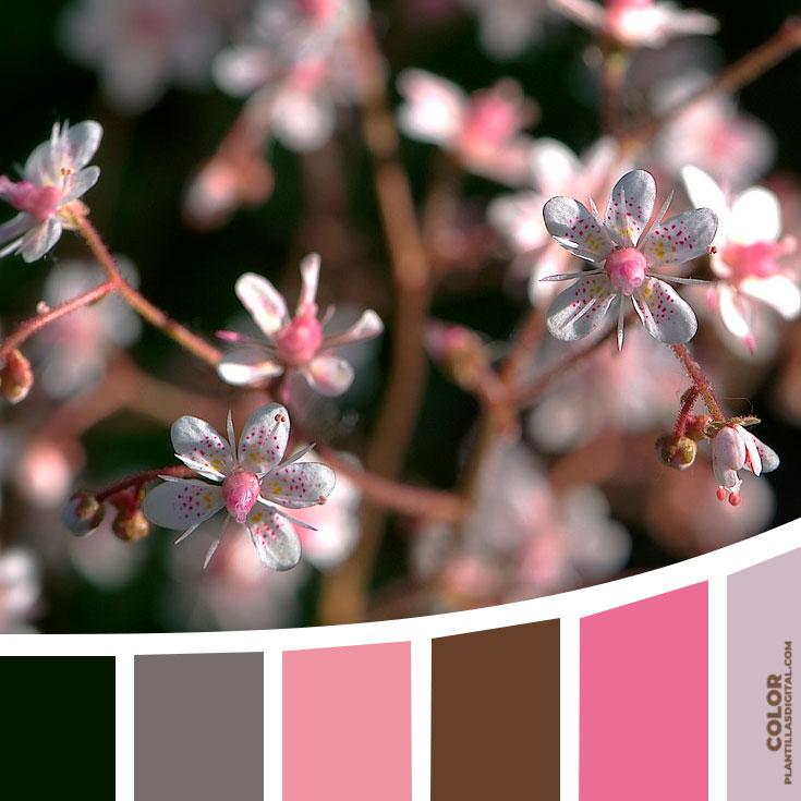 color_530