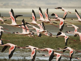Lake Nakuru National Park is popular for birdwatching, black and white rhinoceros sanctuary and a host of other carnivores and herbivores