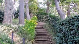丸太の階段 有栖川宮記念公園
