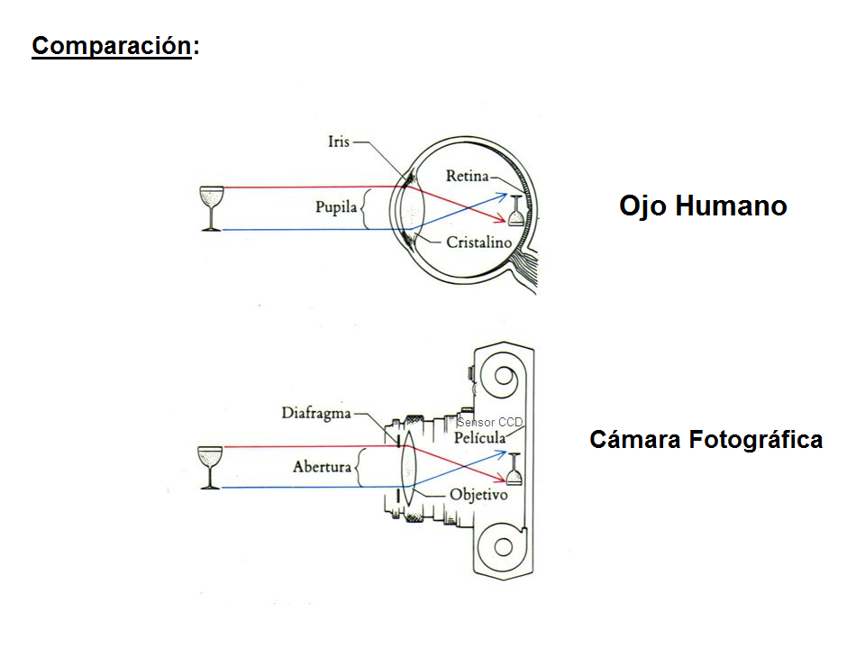 La cámara fotográfica: Esctructura del ojo humano