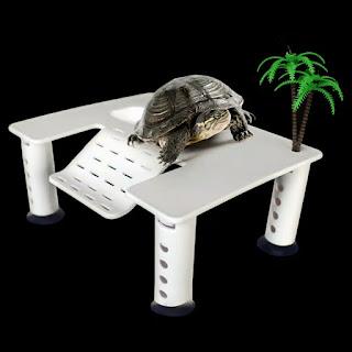 basking-kura-kura-murah.jpg