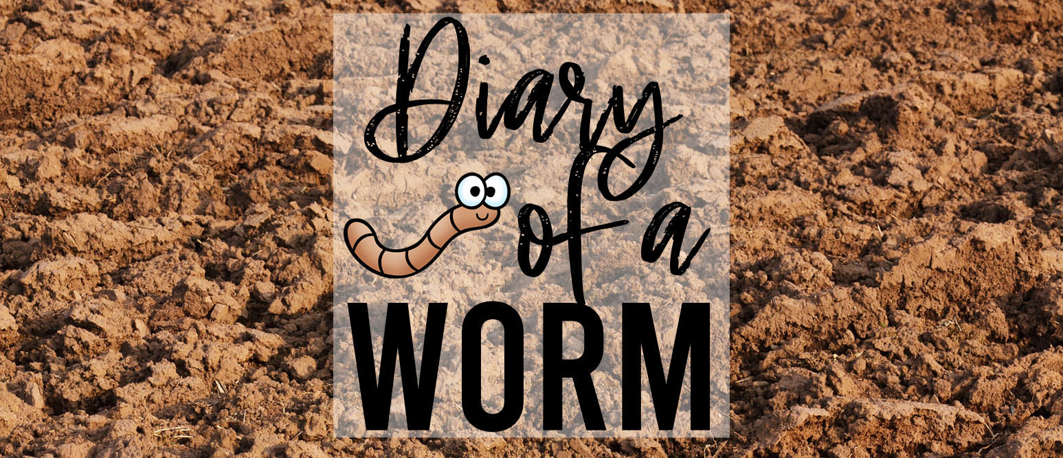 Diary of a Worm book activities with writing activity diary of a kid K-2