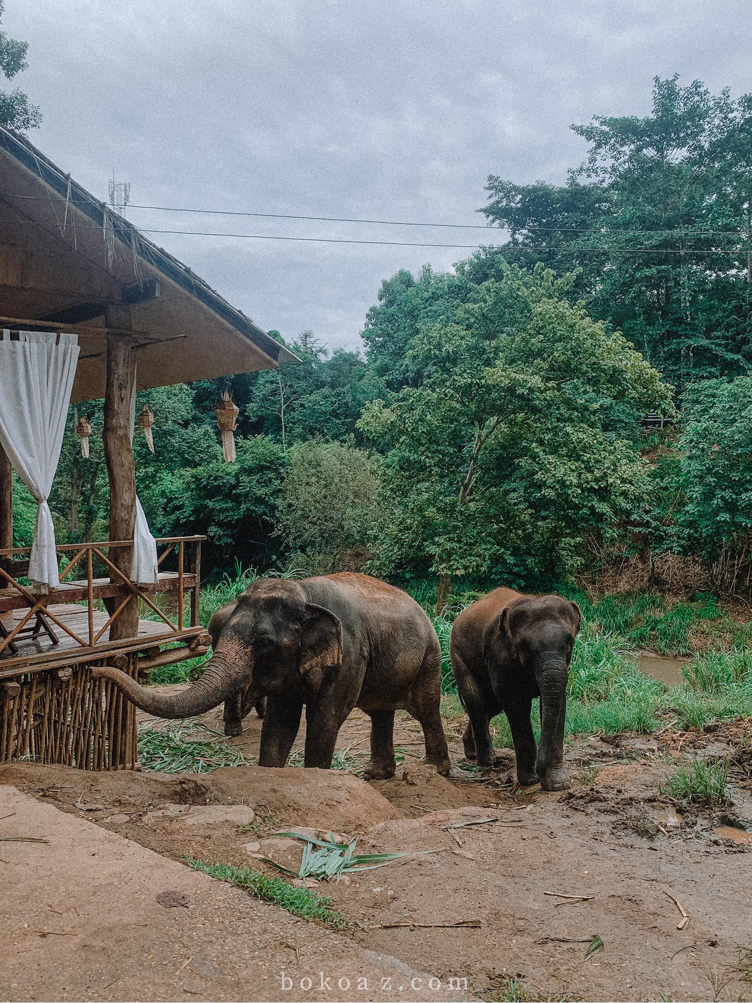 รีวิว ที่พักน้องช้าง chai lai orchids เชียงใหม่