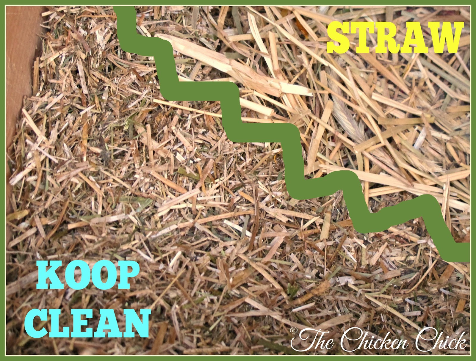 The hay and straw in Koop Clean are cut short, which maximizes absorbency and hastens decomposition of spent bedding in compost vs. straw alone.
