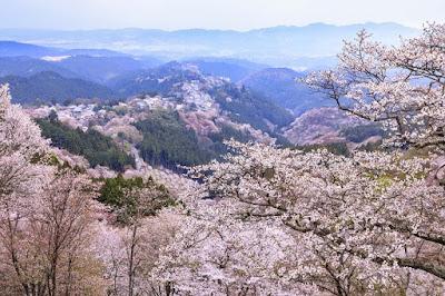 Musim Semi Di Nara Jepang
