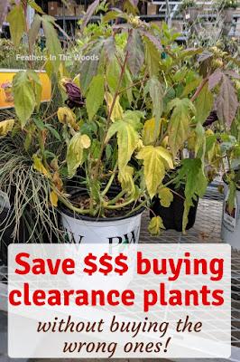 Saving money on perennials.