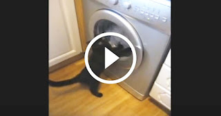 The Cat, The Washing Machine and The Phone