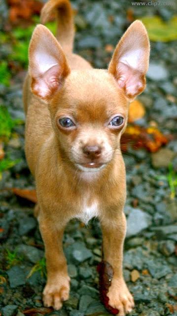 imagenes de perros de ojos azules