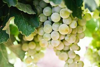 benefits-of-grapes-in-hindi