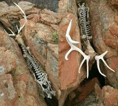 Sad Wild Animal Pictures