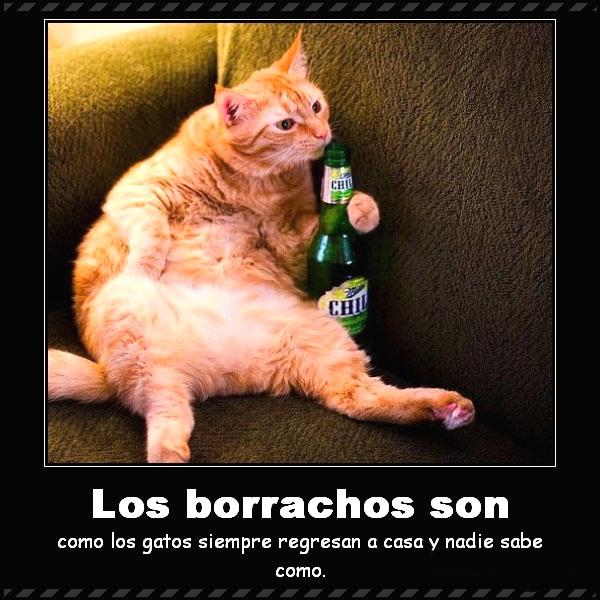 Imagenes Graciosas Chistosas Memes de gatitos