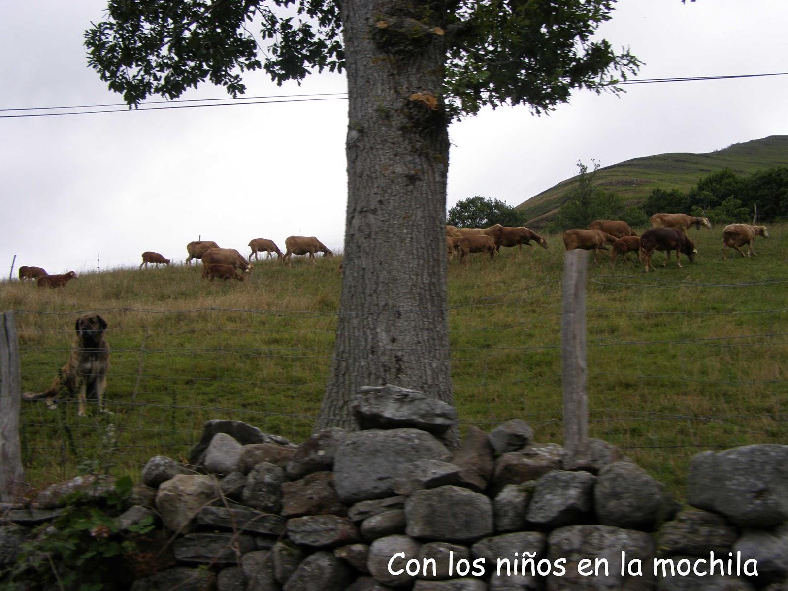 Etapa 2: Asturias, bastión de la biosfera