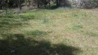 Чистая полянка