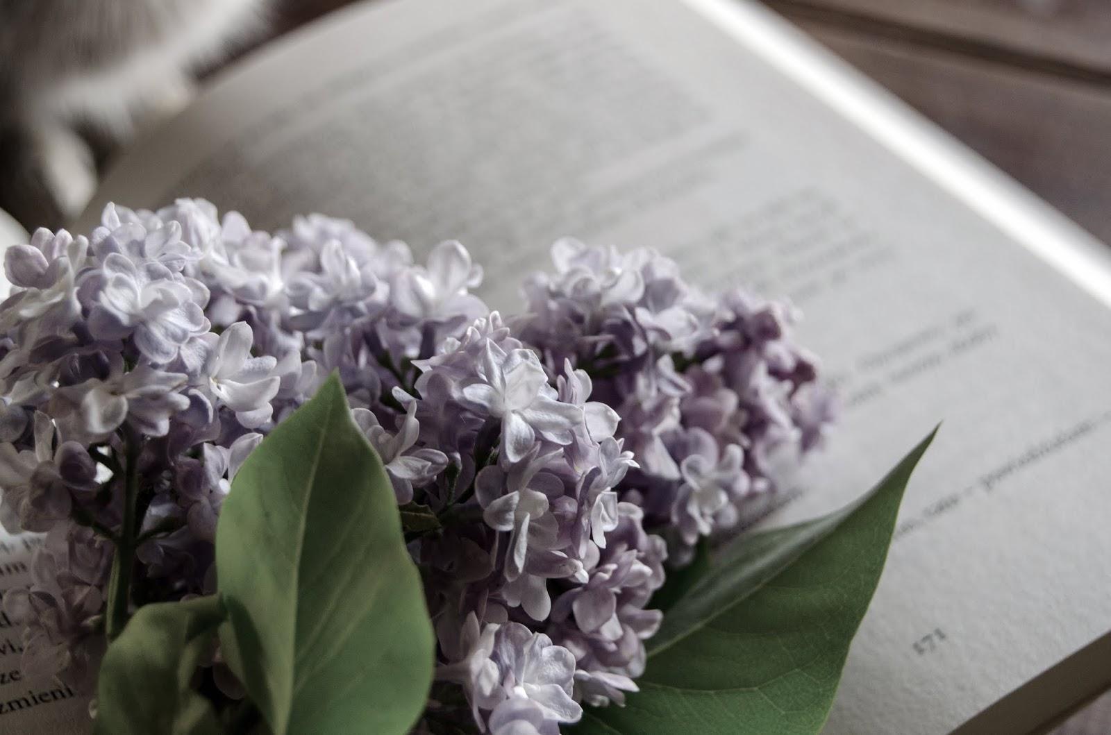bzy | książka | wiosna