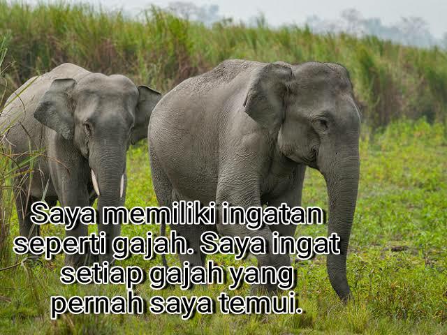 Quote Kata Mutiara Bijak Tentang Hewan Gajah