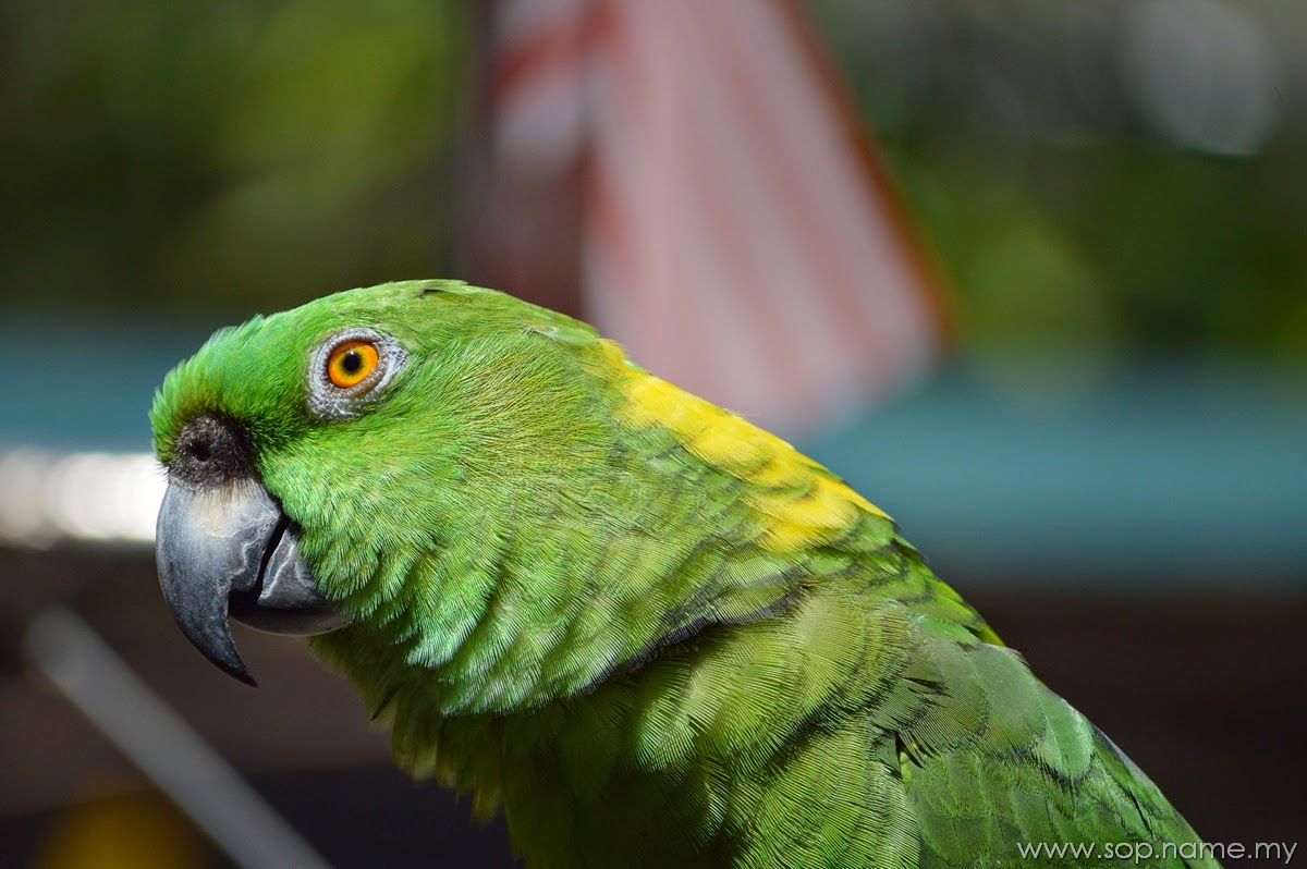Melawat Taman Burung Kuala Lumpur
