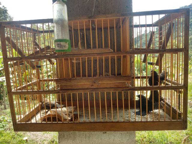 Policia ambiental apreende materiais de caça, animais silvestres e pássaros em Juquiá