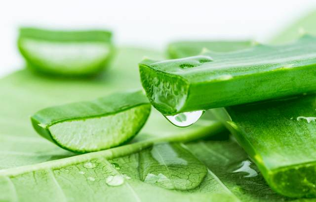 Advantages of Aloe Vera
