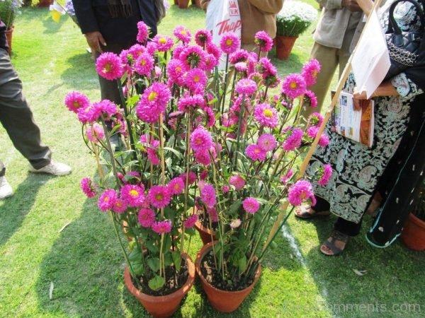 Delhi Flower Show