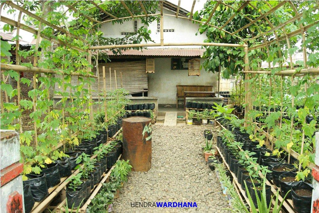 Kebun Inspirasi Ipan Sandi: 17 Ide Kreatif Bikin Kebun Sayur Di Rumah Sendiri