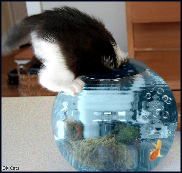 Photoshopped Cat picture • Crazy waterproof kitty tries to catch the goldfish in the fish tank [cat-gifs.com]