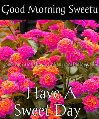 Good Morning Images With Flowers, Good Morning Flower Download Hd, Good Morning Flower HD