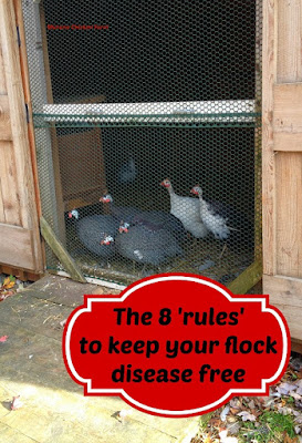 disease prevention chickens